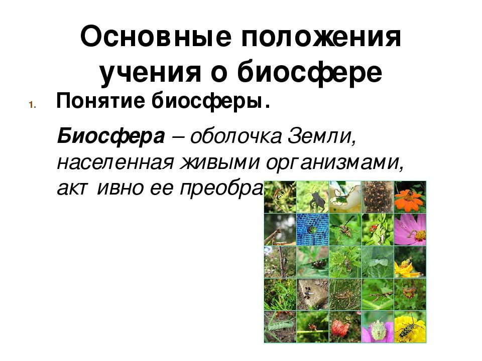 Основные положения учения о биосфере Понятие биосферы. Биосфера – оболочка З...