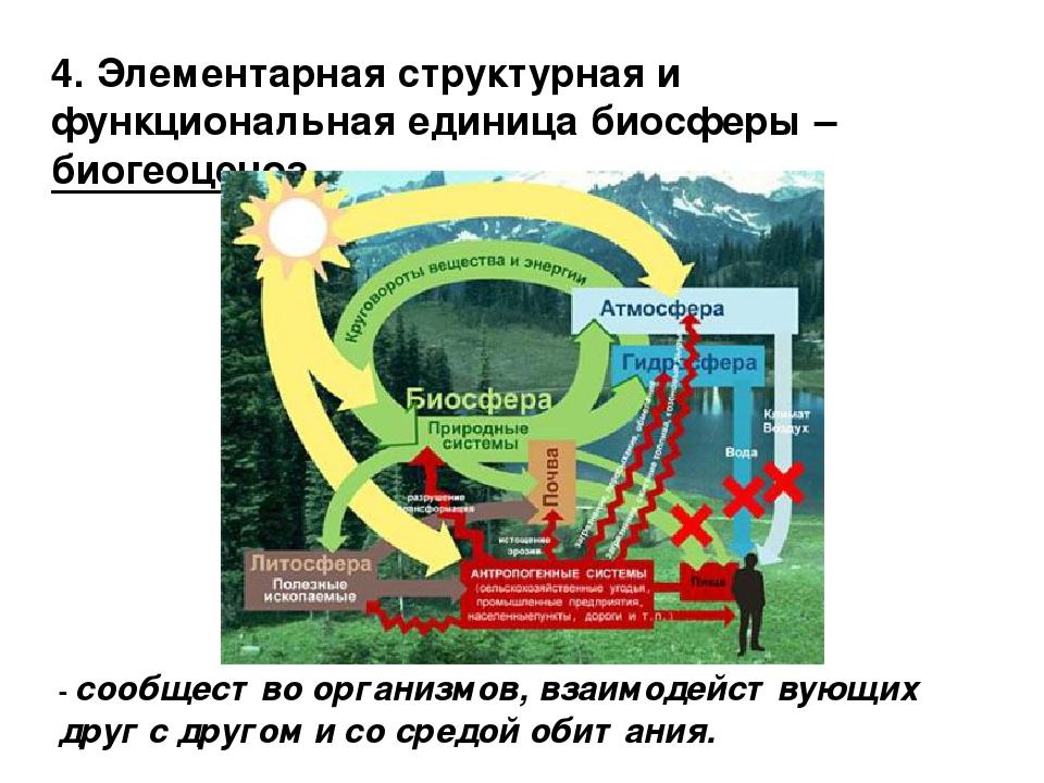 4. Элементарная структурная и функциональная единица биосферы – биогеоценоз....