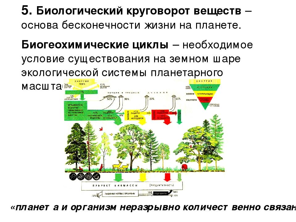 5. Биологический круговорот веществ – основа бесконечности жизни на планете....