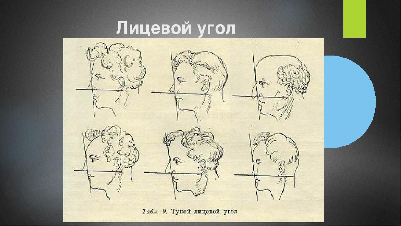 Лицевой угол