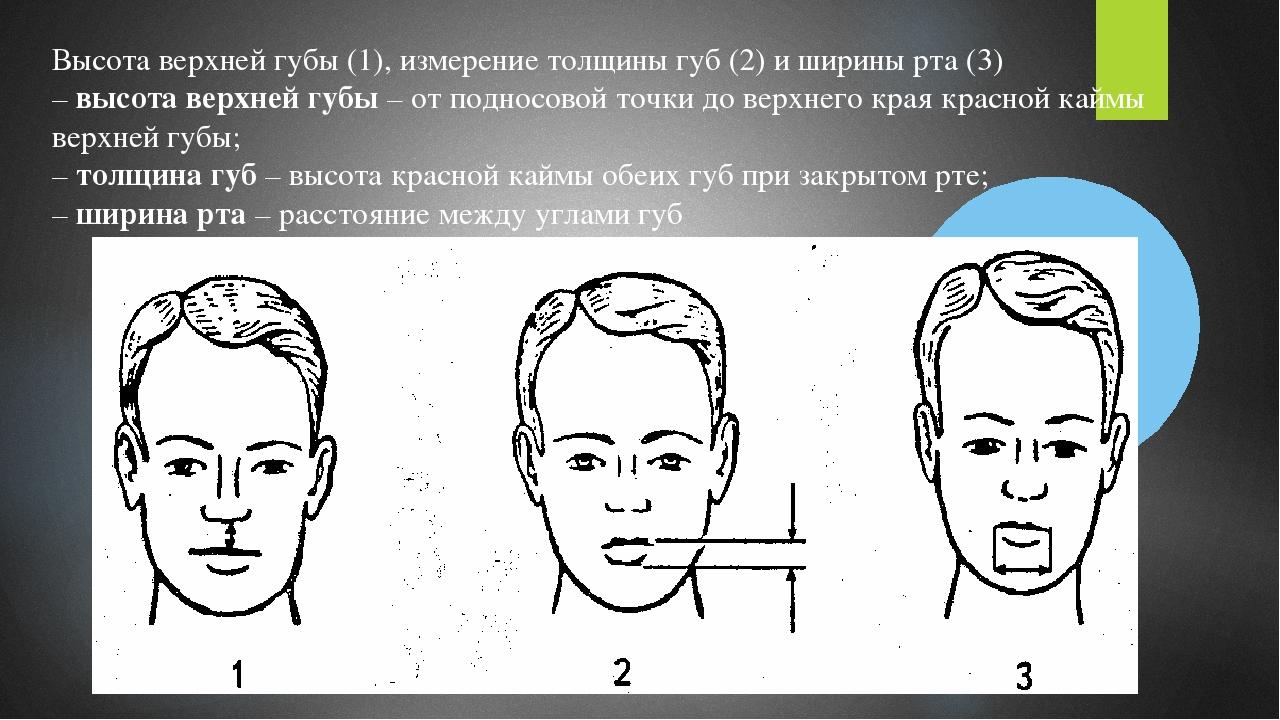 Высота верхней губы (1), измерение толщины губ (2) и ширины рта (3) –высота...