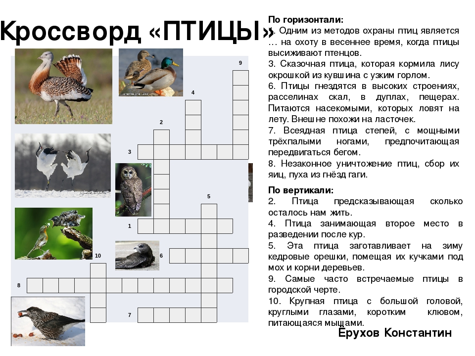 о по гдз беологии кросвордам птицах по