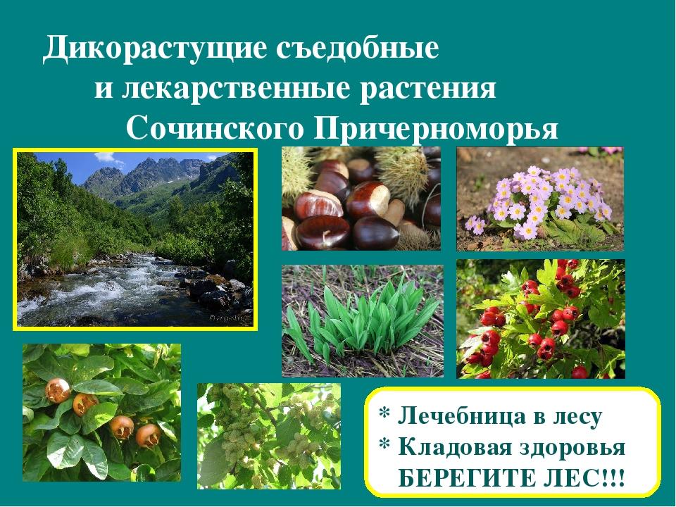 этом месте съедобные дикорастущие растения фото с названиями экрана