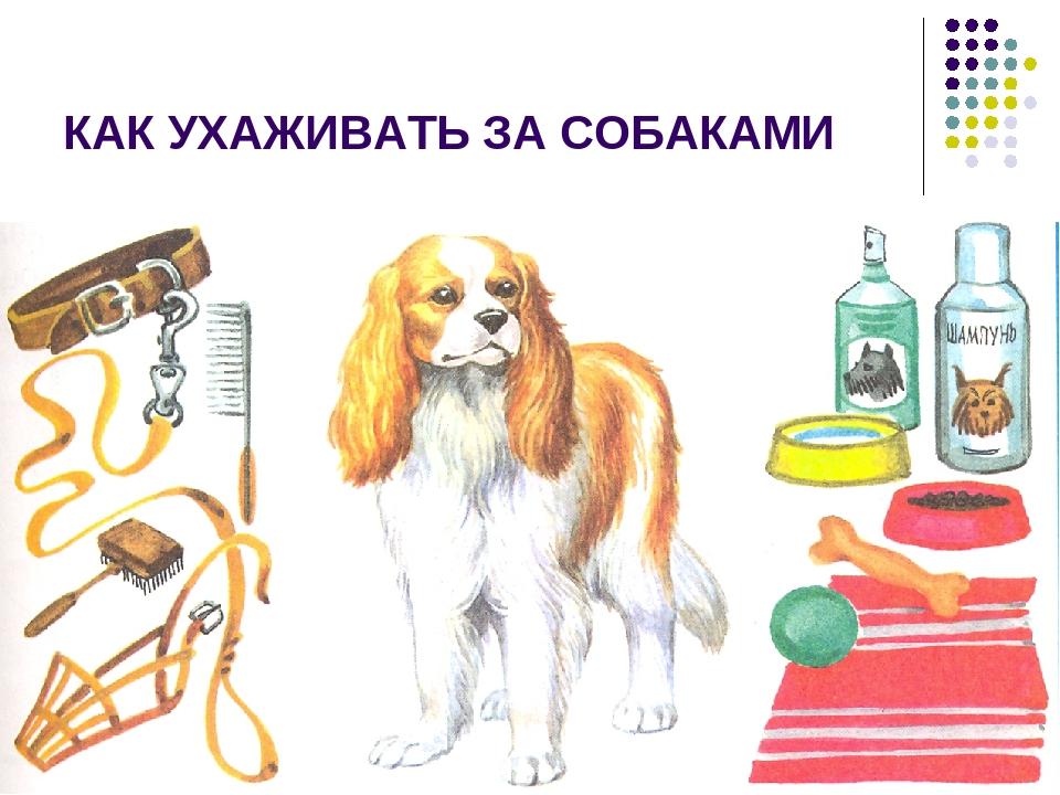 Предметы для ухода за собакой картинки также наносит
