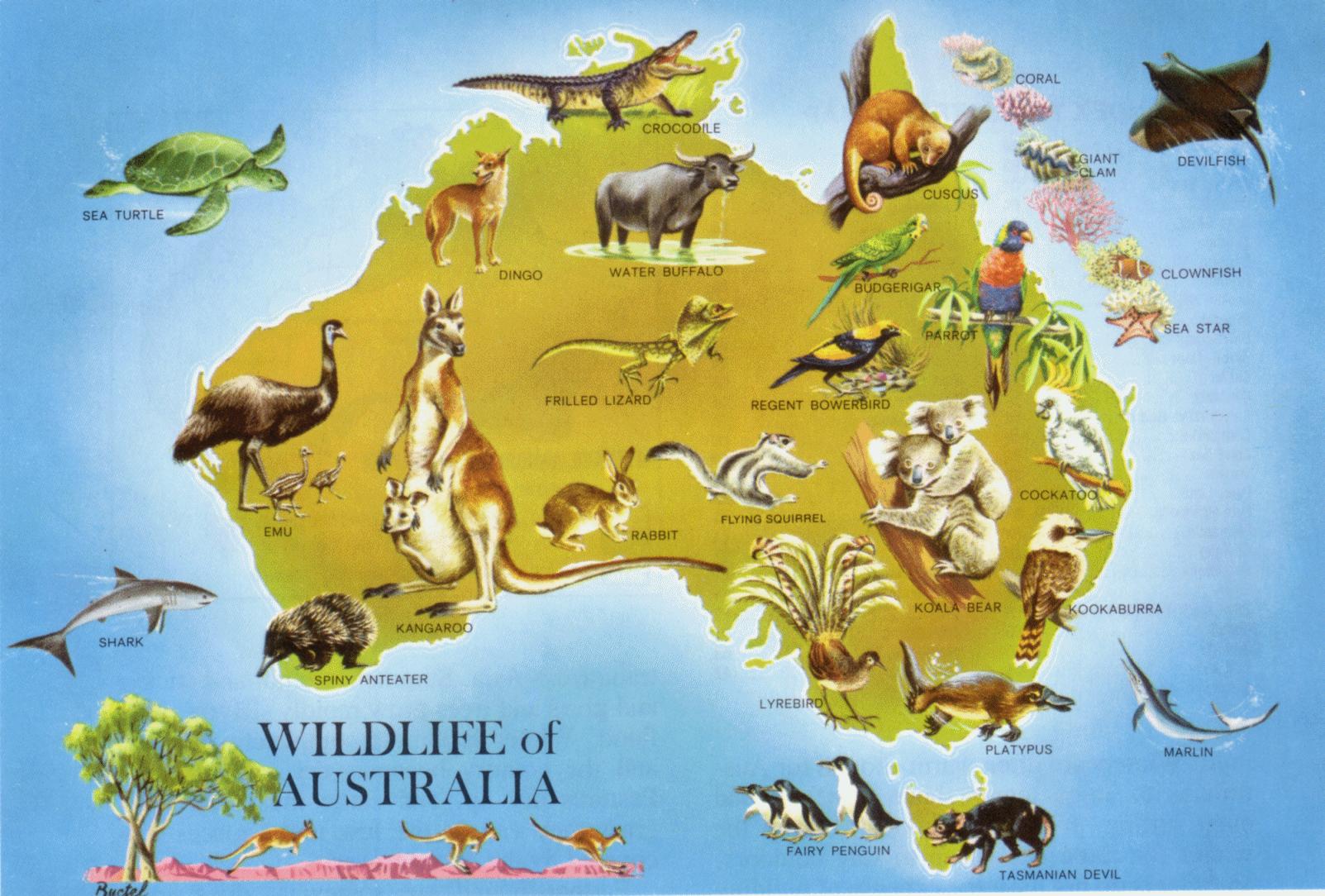 an analysis of the kangaroo environmental adaptation in australia