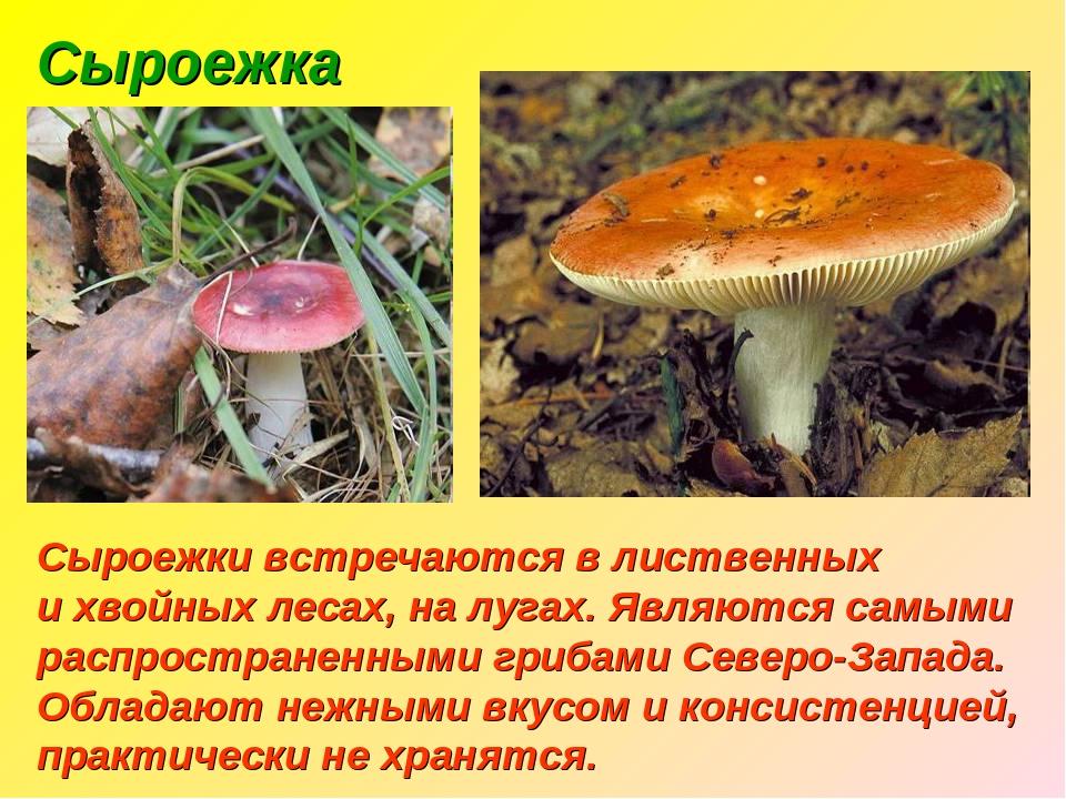 два дня гриб сыроежка фото и описание подготовили для