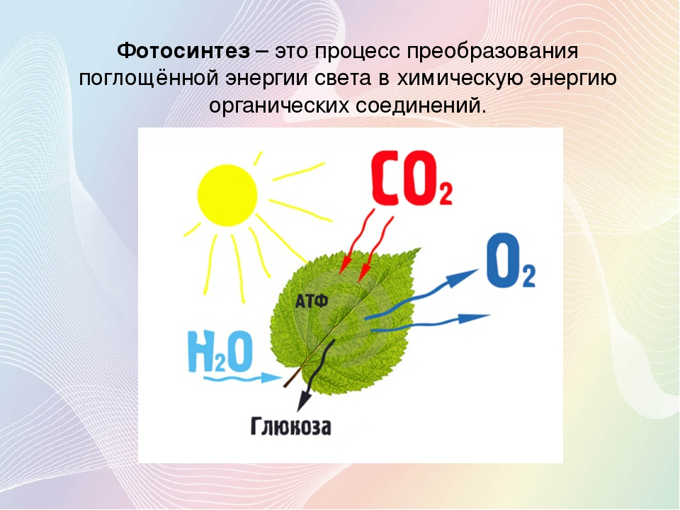 оригинальные происходит ли фотосинтез при искусственном свете внимание, что почти