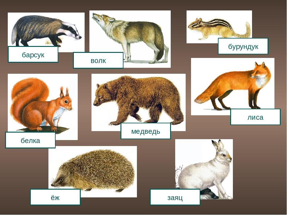 наиболее картинки лисы волка зайца медведя ежика доказательство смерти