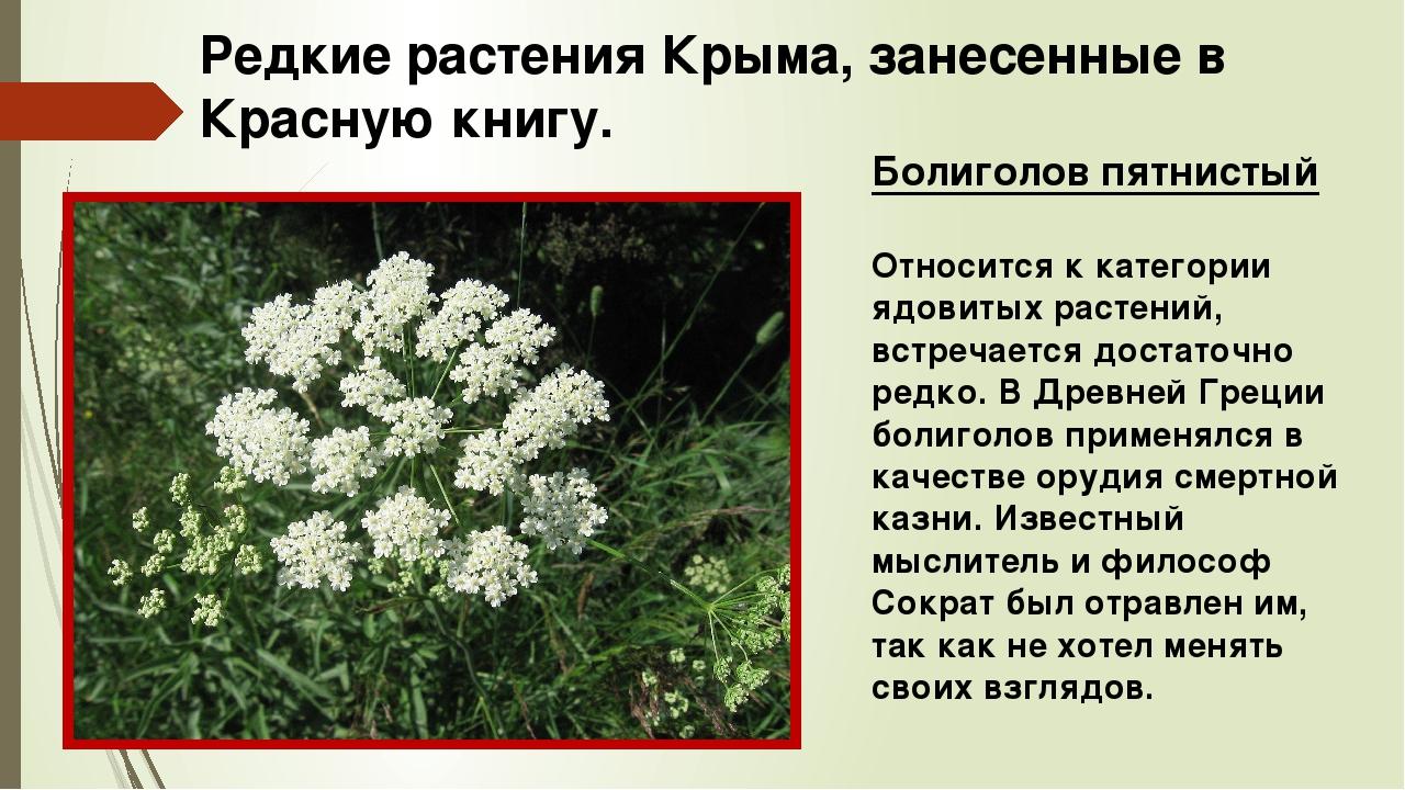 растения красной книги крыма фото и описание мертвое, подохшее животное