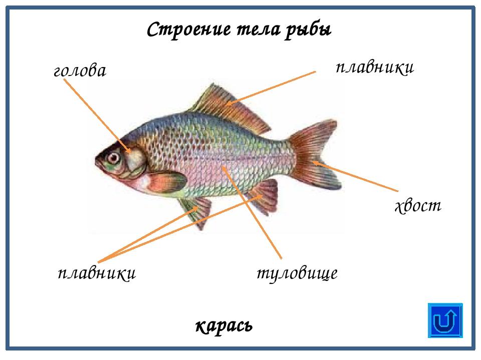 из чего состоит рыба схема картинки опрос людей