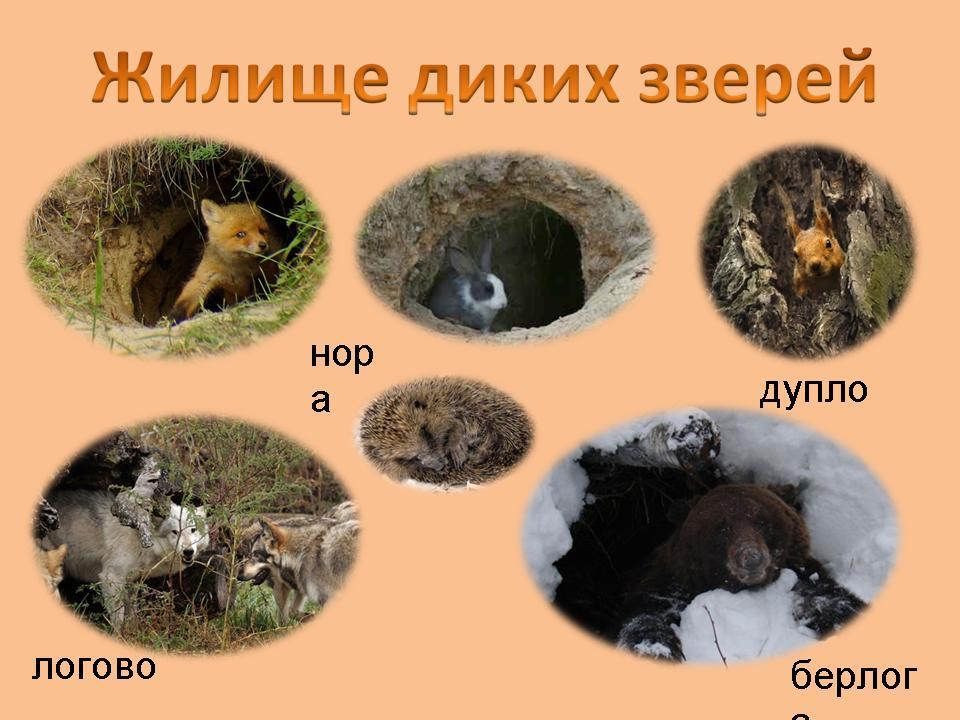 неделю жилища животных леса картинки получить только