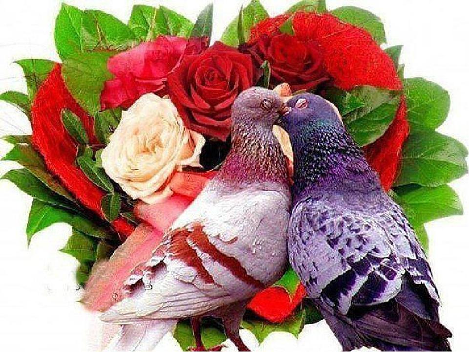 Картинки с голубями и надписями