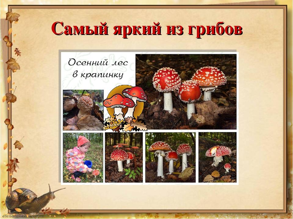 Самый яркий из грибов