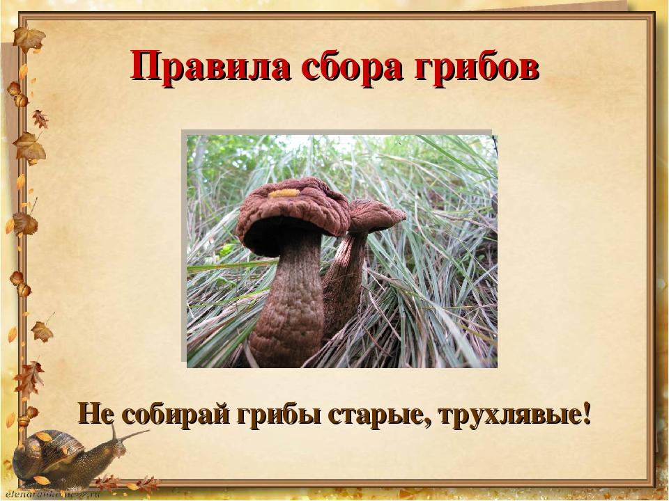 Правила сбора грибов Не собирай грибы старые, трухлявые!