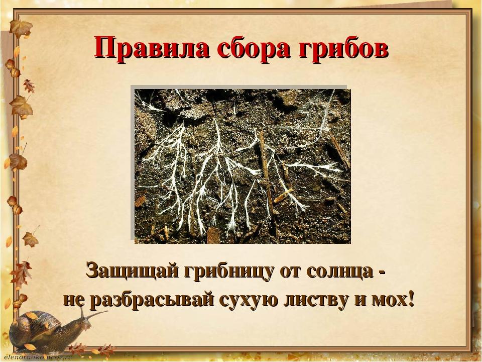 Правила сбора грибов Защищай грибницу от солнца - не разбрасывай сухую листву...