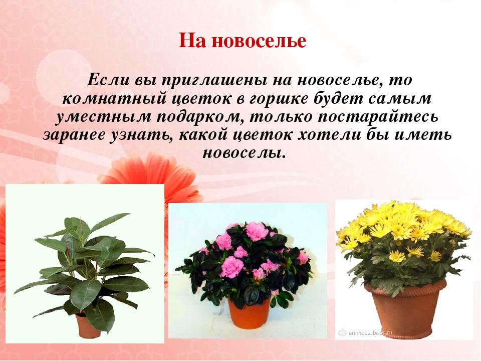 Поздравления к подарку цветок домашний
