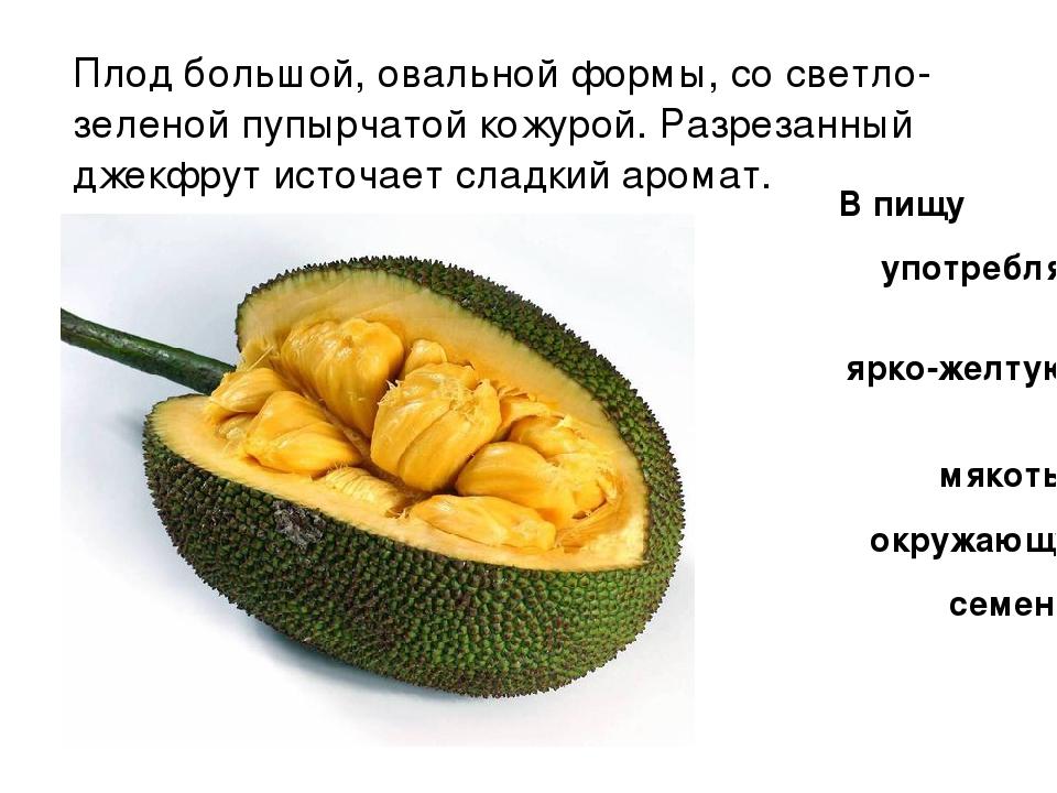Плод большой, овальной формы, со светло-зеленой пупырчатой кожурой. Разрезанн...