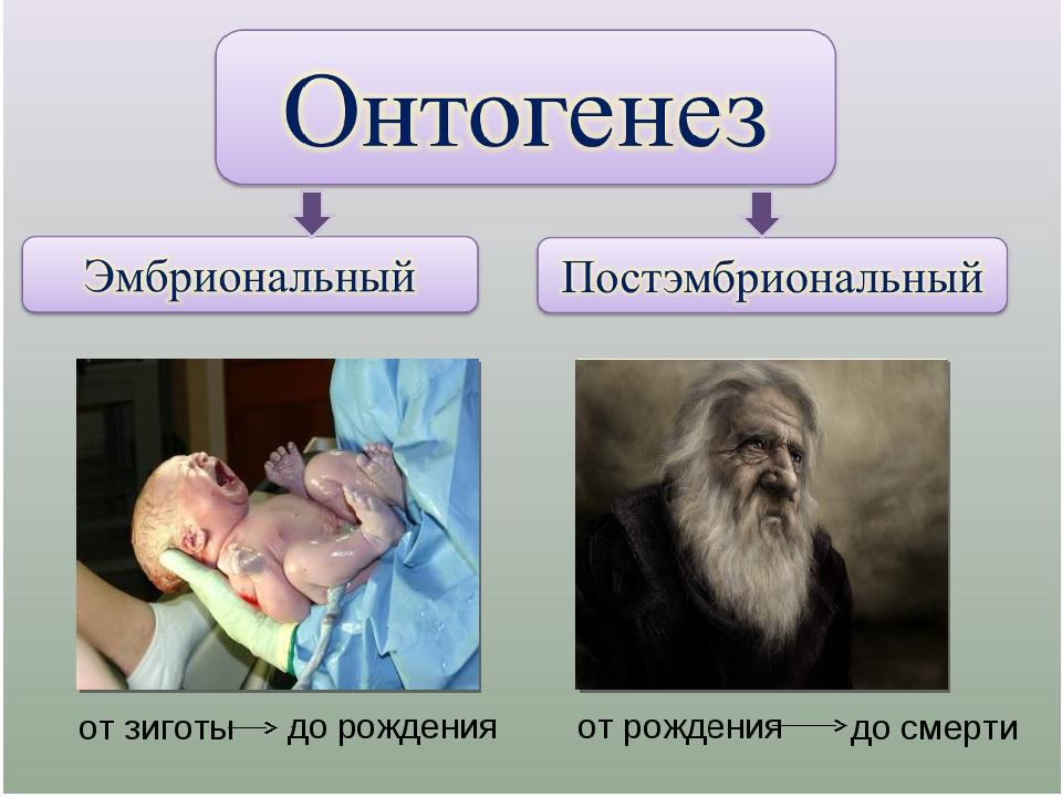 Развитие человека в онтогенезе картинки