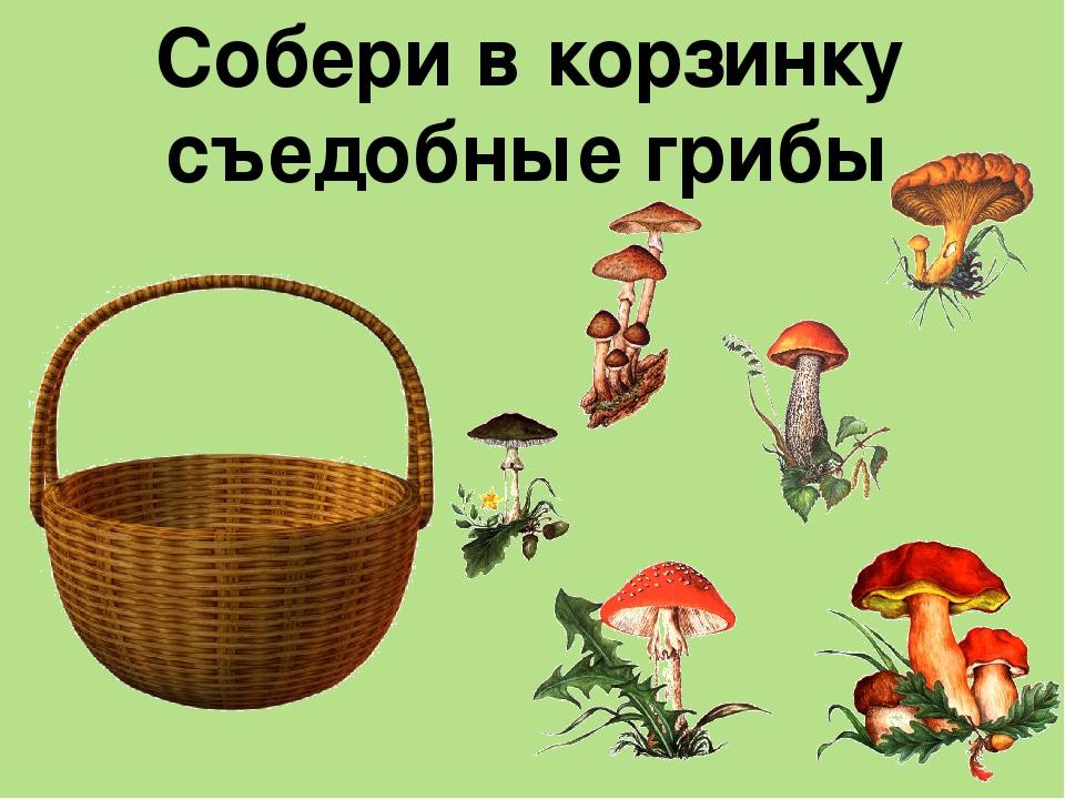 В этой статье вы найдете игры для детей старшего дошкольного возраста по лексической теме «грибы» и картинки к ним.