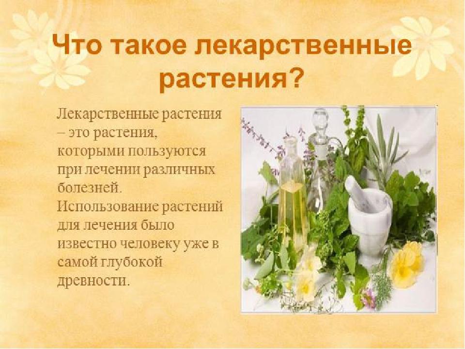 Картинки презентации лекарственные растения плиты