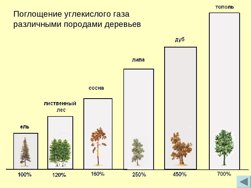 Мировой тренд – зелёный пакет. «Неточности» в расчетах…