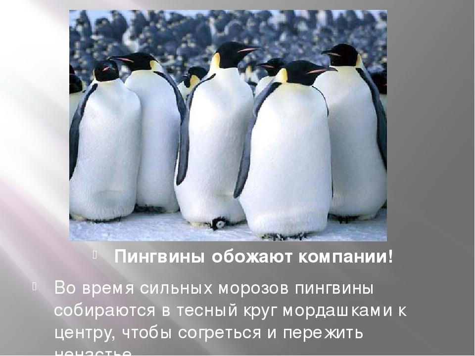 картинка ты будешь моим пингвином следует