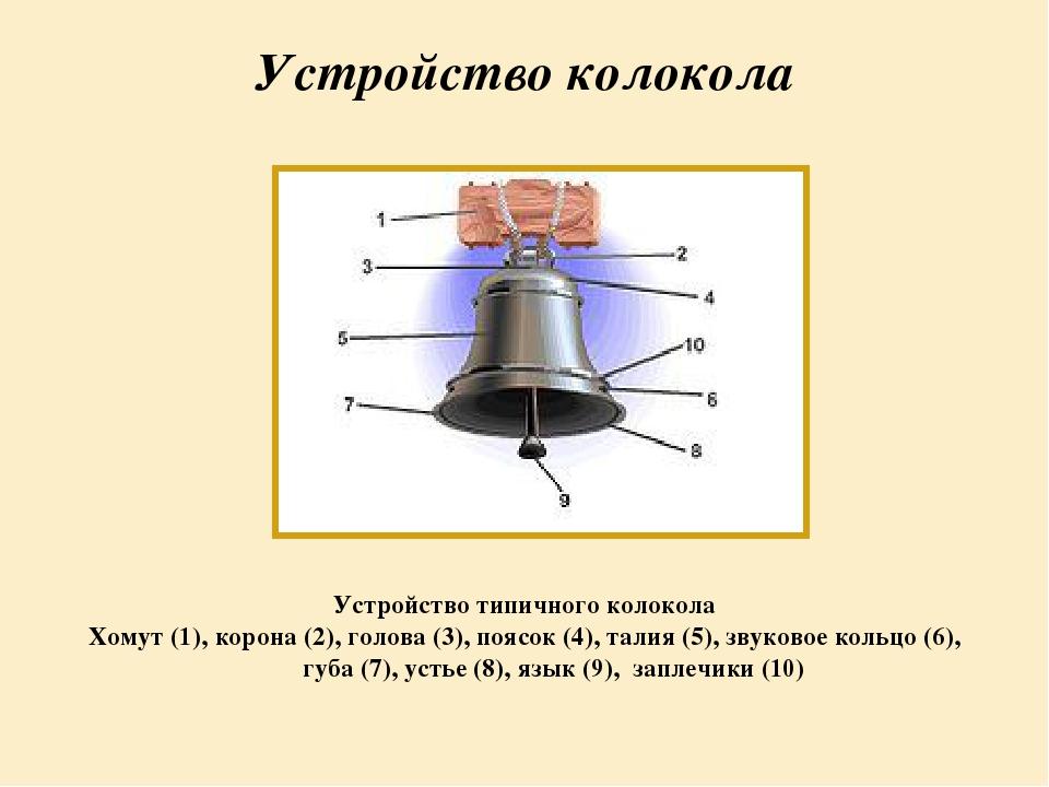 Строение колокольчика картинка