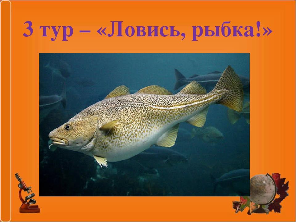 3 тур – «Ловись, рыбка!»