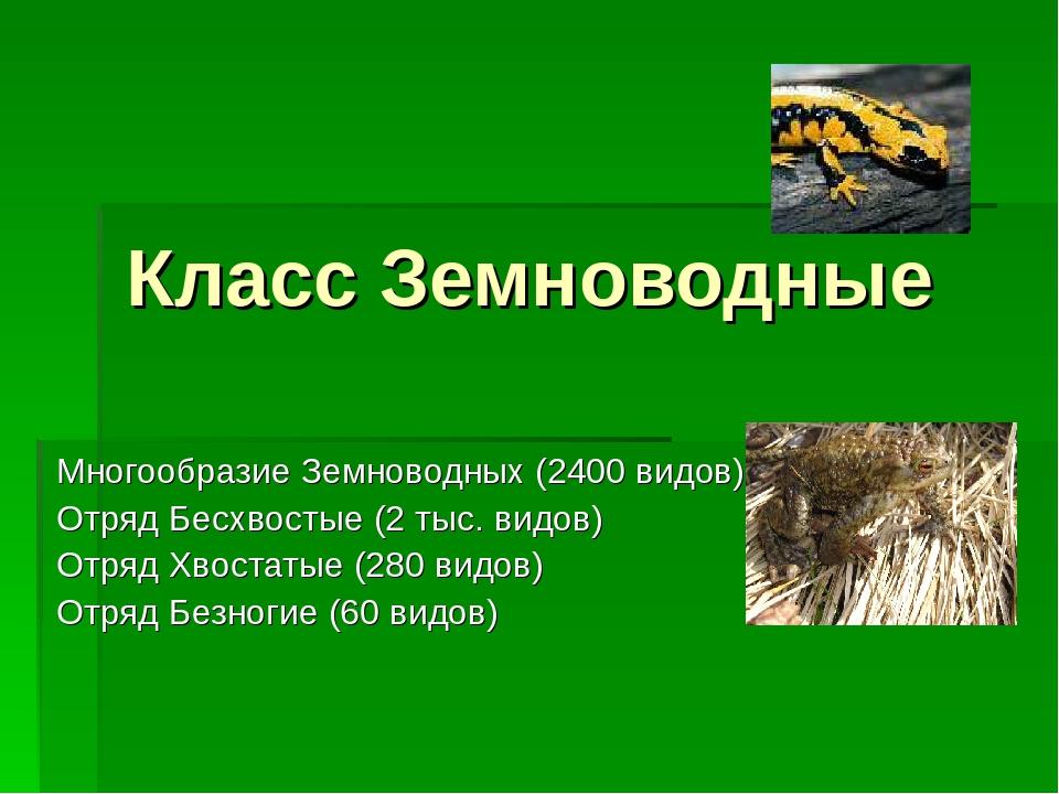 Класс Земноводные Многообразие Земноводных (2400 видов) Отряд Бесхвостые (2 т...