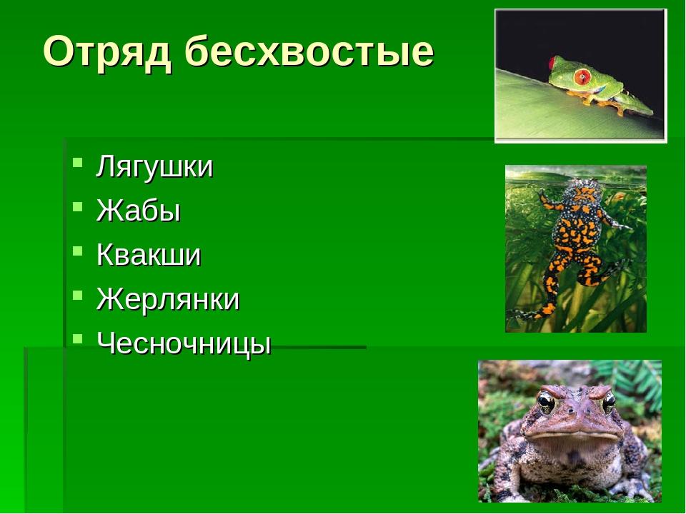 Отряд бесхвостые Лягушки Жабы Квакши Жерлянки Чесночницы