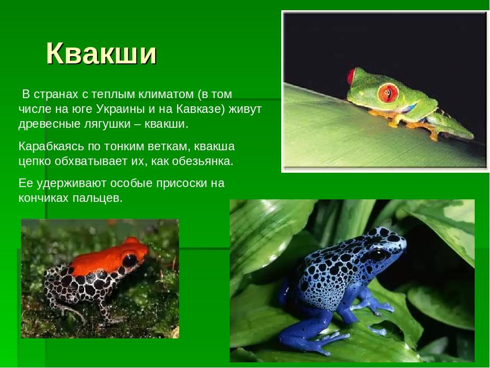 Квакши В странах с теплым климатом (в том числе на юге Украины и на Кавказе)...