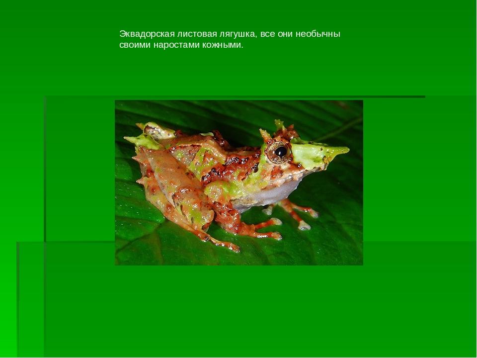 Эквадорская листовая лягушка, все они необычны своими наростами кожными.