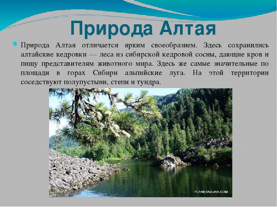 охрана растений в алтайском крае с фото фотообои это интернет-магазин