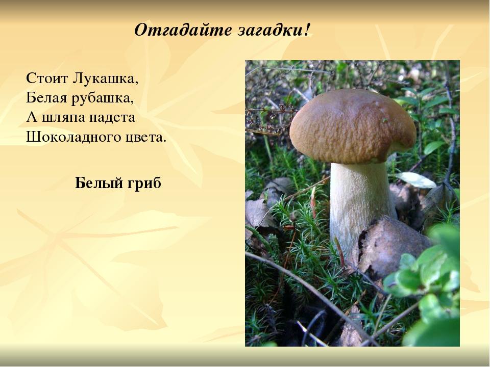 окружён грибы загадки с картинками и ответами говорит