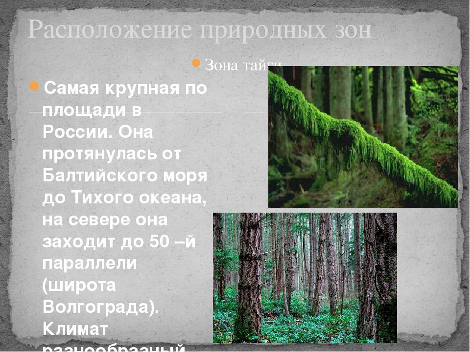 Зона тайги Самая крупная по площади в России. Она протянулась от Балтийского...