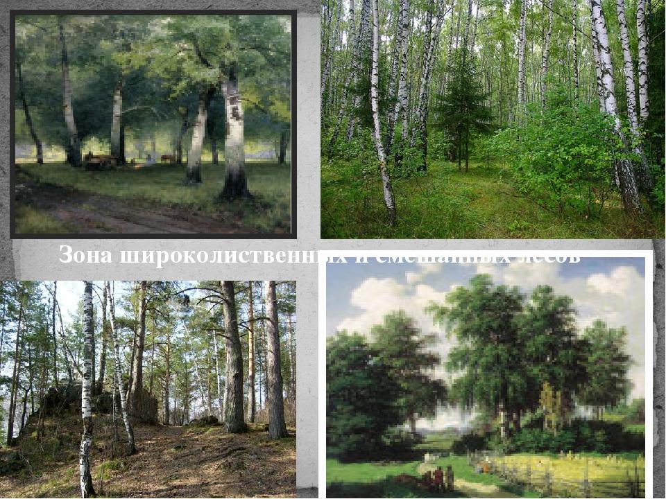 Зона широколиственных и смешанных лесов