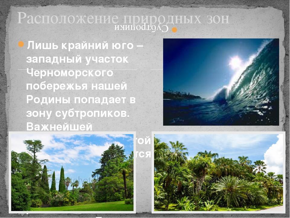 Субтропики Лишь крайний юго – западный участок Черноморского побережья нашей...