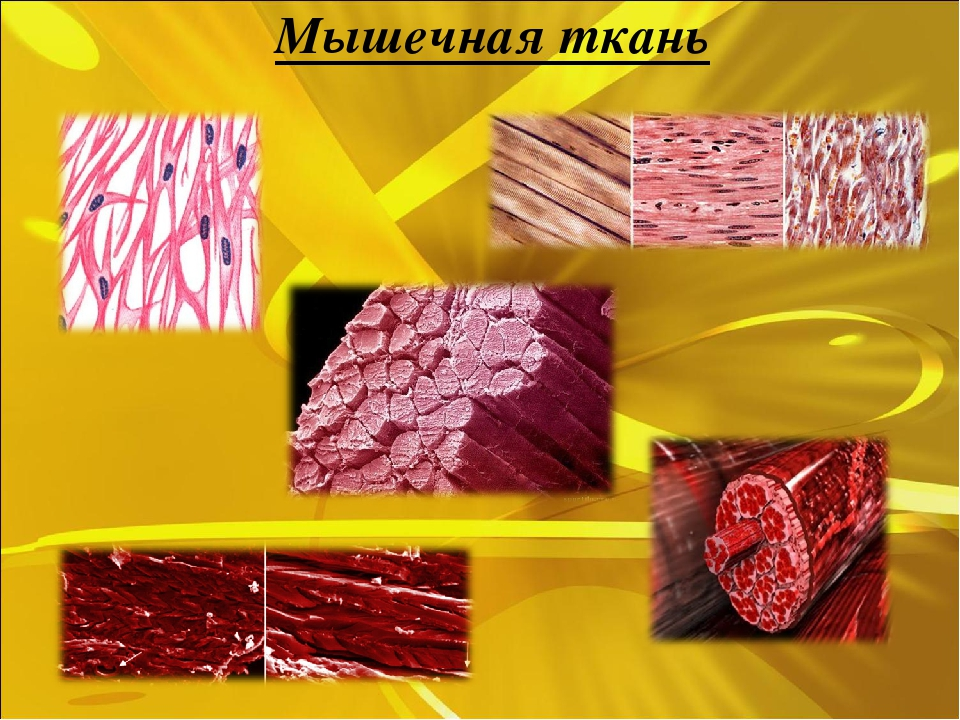 Рецепт жареного мяса на сковороде с фото категории фото