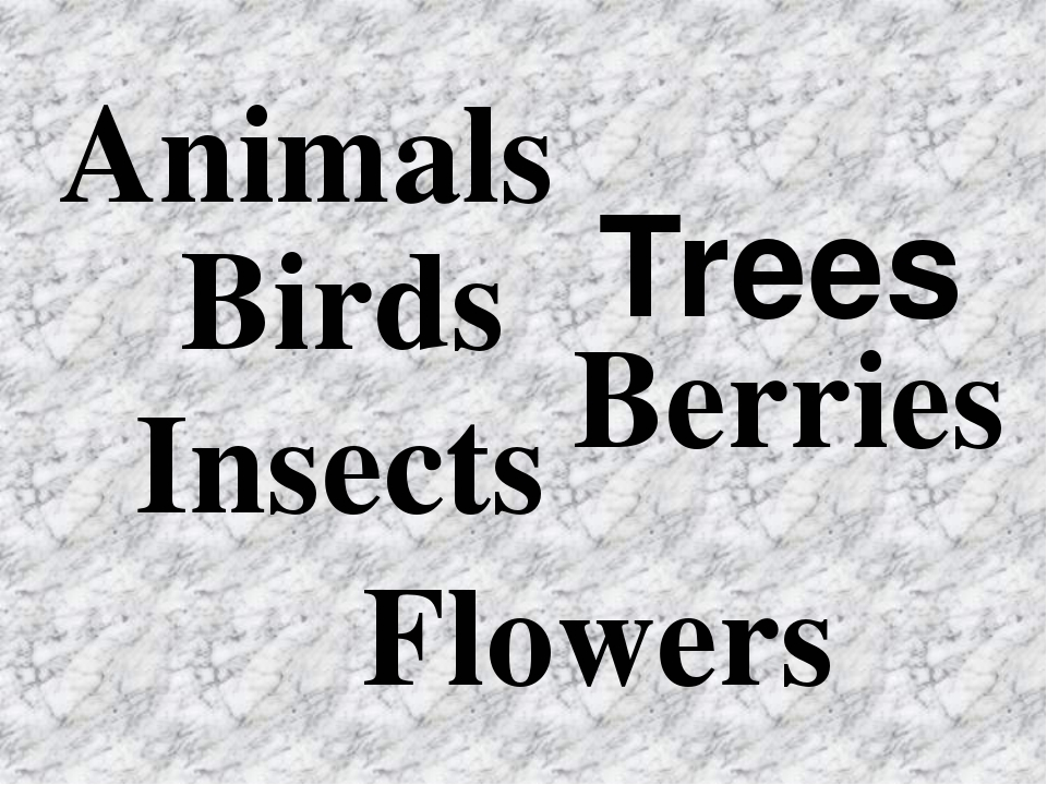 Animals Birds Insects Trees Berries Flowers
