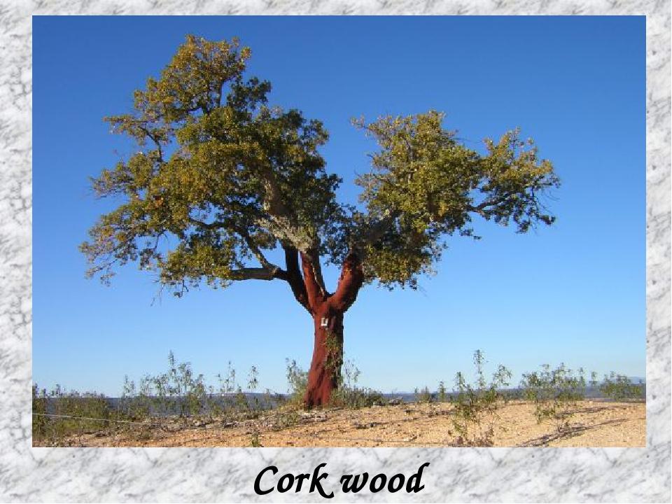 Cork wood