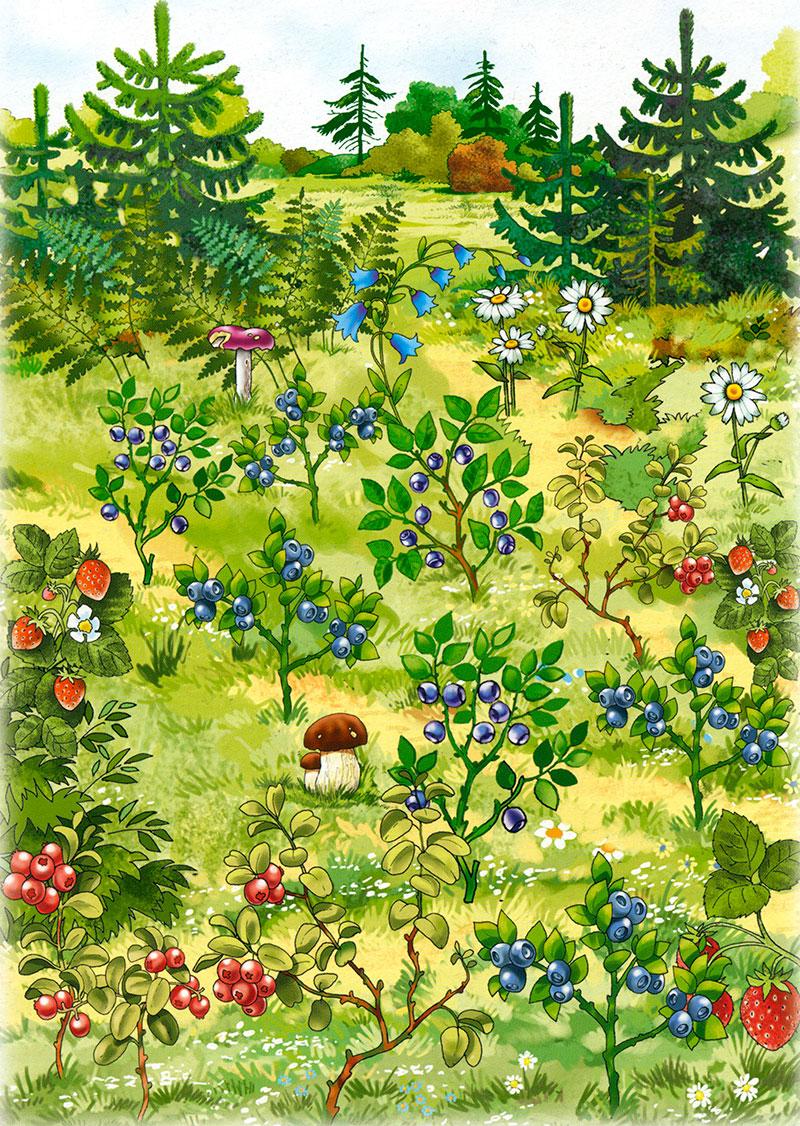 Картинки того что растет в лесу