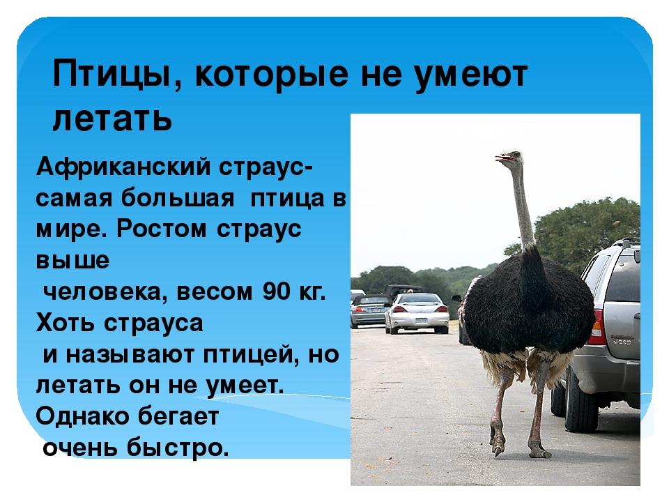 Птицы, которые не умеют летать Африканский страус- самая большая птица в мире...