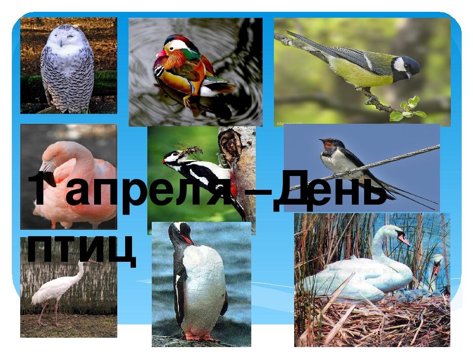 1 апреля –День птиц