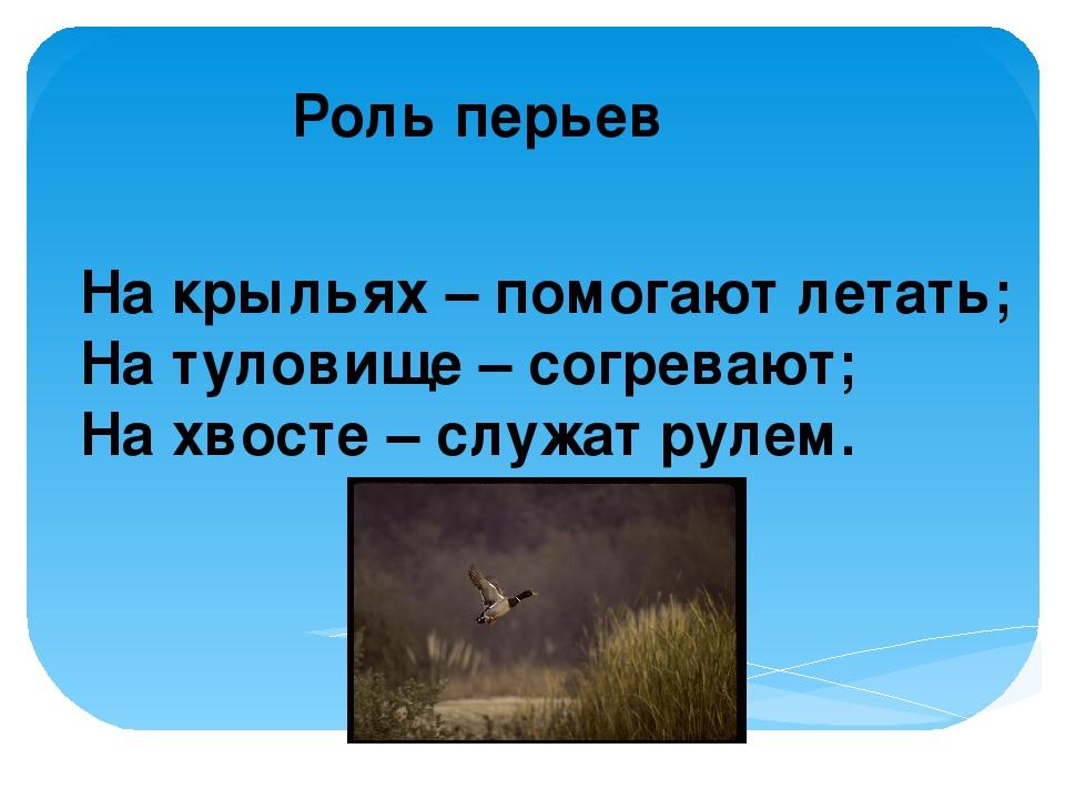 Роль перьев На крыльях – помогают летать; На туловище – согревают; На хвосте...