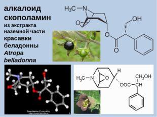 алкалоид скополамин из экстракта наземной части красавки беладонны Atropa bel