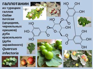 галлотанин из турецких галлов Gallae turcicae (цецидиев, чернильных орешков)