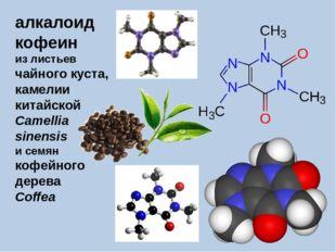 алкалоид кофеин из листьев чайного куста, камелии китайской Camellia sinensis