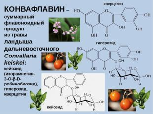 КОНВАФЛАВИН – суммарный флавоноидный продукт из травы ландыша дальневосточног
