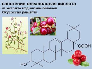 сапогенин олеаноловая кислота из экстракта ягод клюквы болотной Oxycoccus pal
