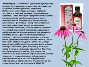 ЭХИНАЦЕЯ ПУРПУРНАЯ (Echinacea purpurea) многолетнее травянистое растение из с